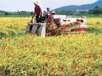 I. Основные данные по развитию сельской экономики Китая